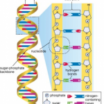 Attacking the Human Genome:  Biological-Based Crimes